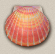 Shell Deep Water Bio-Urn in Coral